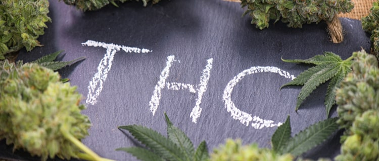 大麻のバッズで囲まれたTHCの文字