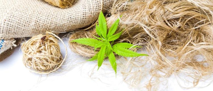 麻の繊維と葉