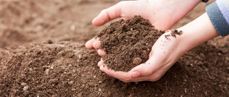 土を掬う手