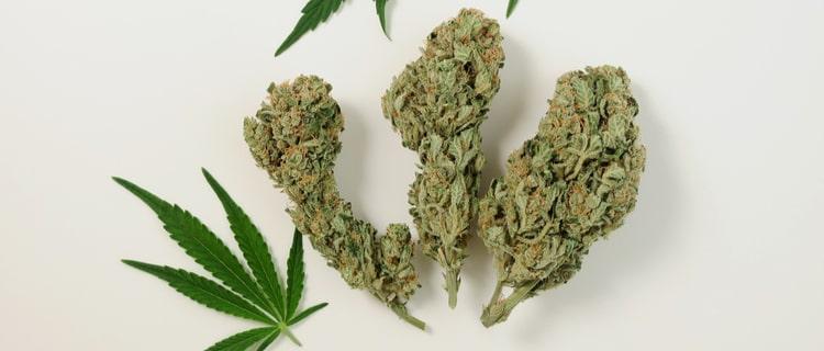 大麻のバッズ