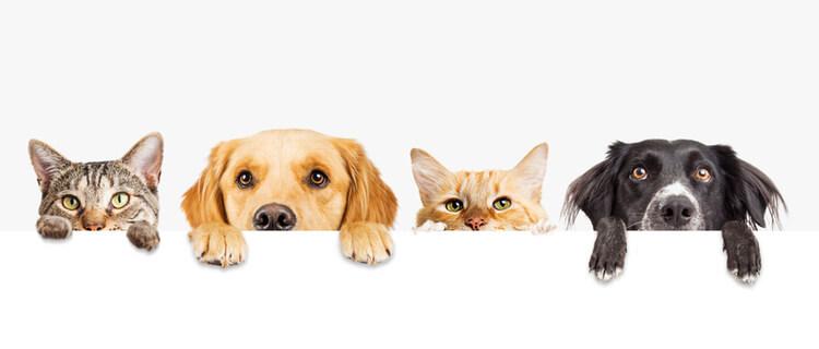 机から顔を出す犬と猫