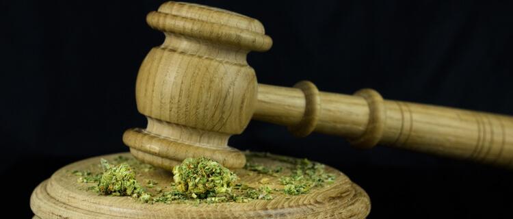 木槌で砕かれる大麻バッズ
