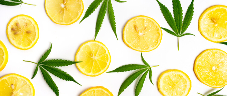 レモンと大麻の葉