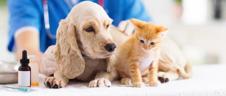 獣医師と犬猫
