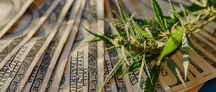 大麻と紙幣