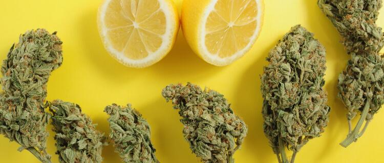レモンと大麻のバッズ