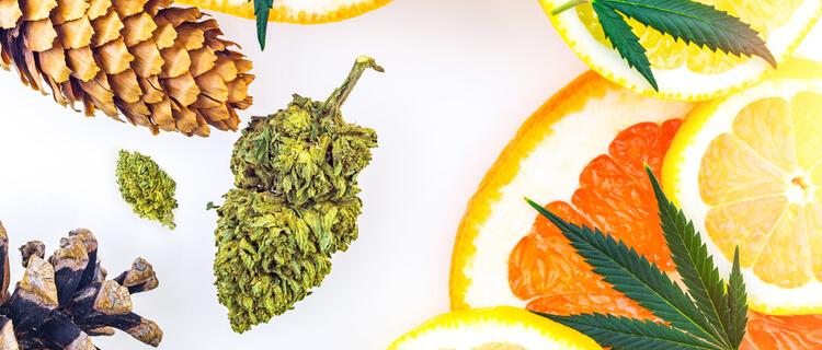 柑橘類と大麻のバッズ