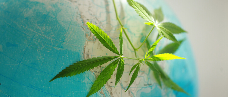 世界地図の上に大麻の葉