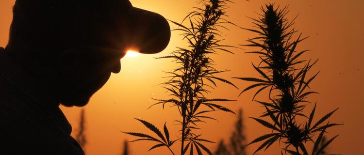 大麻と男性のシルエット